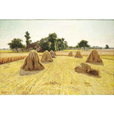 grain_fields